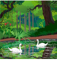 swans on a forest pond vector image vector image