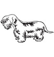 decorative standing portrait of sealyham terrier vector image vector image