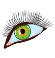 green female eye vector image