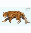 jaguar lurking vector image vector image