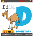 letter d from alphabet with cartoon dromedary vector image vector image