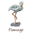 flamingo color vector image