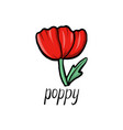 flower of poppy vector image