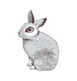 hand drawn bunny vector image