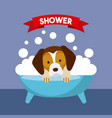 wonderful dogs accessories vector image