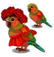 colorful parrot in a red skirt and a wreath of vector image