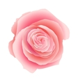 Pink rose isolated EPS 10 vector image vector image