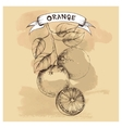 sketch of orange for design vector image vector image