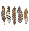 eagle feathers vector image