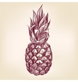 fruit pineappl hand drawn illustration vector image vector image