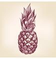 Fruit pineappl hand drawn llustration vector image