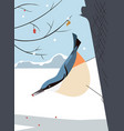 nuthatch moves virtuously along the tree trunk vector image
