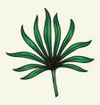 green palm leaf vintage template vector image