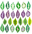 colorful caricature plant leave set vector image vector image