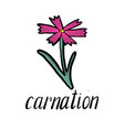 flower of carnation vector image