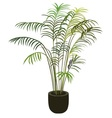 tropical palm tree in flowerpot vector image