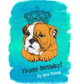 Birthday card of puppy english bulldog in crown
