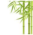 green bamboo stems vector image vector image