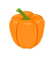 orange bell pepper isolated on vector image