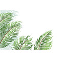 palm leaves isolated on white background vector image vector image
