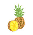 pineapple tropical plant edible fruit poster vector image vector image