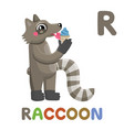 r is for raccoon letter r raccoon cute animal vector image vector image