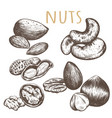 nuts set sketch vector image
