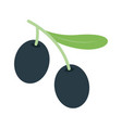 olive tree branch icon vector image