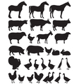Silhouettes of farm animals vector image