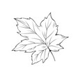 maple tree leaf coloring book vector image vector image