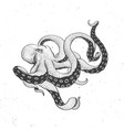 octopus vintage on white vector image vector image