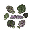 set with artichoke vector image