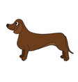 cute cartoon dachshund isolated on white vector image