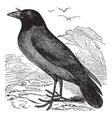 Hooded Crow vintage engraving vector image vector image