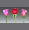 realistic roses buds with stem and leaves closeup vector image vector image