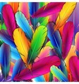Background with colorful feathers vector image