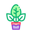 plant in pot icon outline vector image vector image