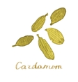 Watercolor cardamom on the white background vector image