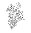 freesia flower graphic black white isolated sketch vector image