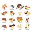 nuts and seeds nut and seed in vector image vector image
