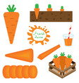 set carrots in flat style vector image