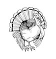 turkey coloring book vector image vector image
