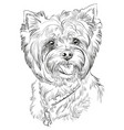 hand drawing portrait of yorkshire terrier vector image vector image