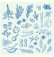 hand drawn herbs and spices on cell sheet vector image