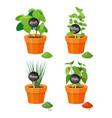natural spices grown in plastic flowerpots set vector image
