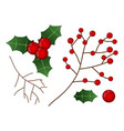 red berry with leaf and branch christmas vector image vector image