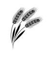wheat ears black silhouette icon organic vector image vector image