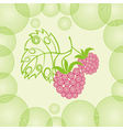 Raspberry background vector image vector image