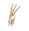 ripe dry ears of spelt on stem in flat style vector image