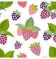 seamless pattern of raspberry vector image